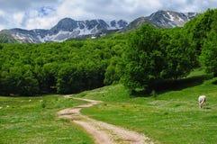Mainarde av berg Arkivfoton