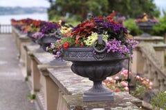 Mainau Blumeninsel kwiaty fotografia stock