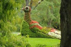 Mainau botaniska trädgårdar Royaltyfria Bilder