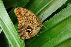 Mainau-Schmetterling Lizenzfreies Stockfoto