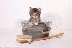 Maincoon Kitten With Big Eyes dans se baigner de bassine Photo stock
