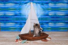 Maincoon Kitten With Big Eyes in Zeilboot Stock Foto