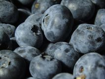 Maine Blueberries images stock