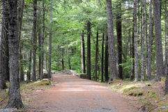 Maine carriage road. Maine walking trail on old carriage road stock photos
