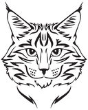 Maine Coon cat. Contour image of muzzle flurry Maine Coon cat Royalty Free Stock Photos