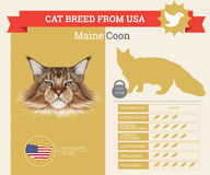 Maine Coon Cat breed  infographics Stock Images