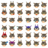 Maine Coon Cat Emoji Emoticon Expression Stock Images