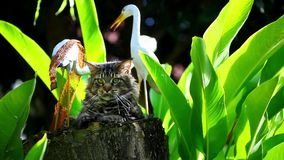 Maine coon cat in nature sitting on a tree stump Royalty Free Stock Photo
