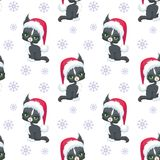 Maine coon cat pattern Stock Photo