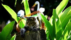 Maine coon cat playing on a stump Royalty Free Stock Photo