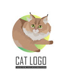Maine Coon Cat Vector Flat Design Illustration Stock Photography