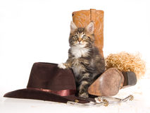 Maine Coon with cowboy gear Stock Photo
