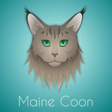 Maine coon. Face on background. Vector illustration Stock Images