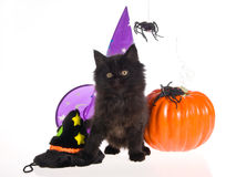 Maine Coon with Halloween props Stock Photos