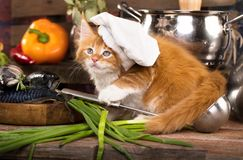 Kitten and fish fresh in the kitchen stock images