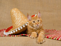 Maine Coon kitten with sombrero hat. Maine Coon kitten lying on red carpet with sombrero, on hessian background stock images