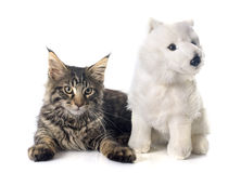 Maine coon kitten and toy Stock Photos