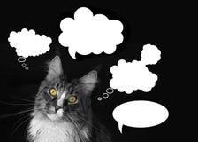 maine coon kot z chmury myśli na czarnym tle Fotografia Stock