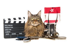 Maine Coon with movie props on white background Royalty Free Stock Photo