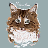 Maine Coon Painting Poster Stock Photos