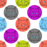 Maine coon pattern. Maine coon cat portrait. Hand drawn vector illustration. Pet seamless pattern background Royalty Free Stock Photo