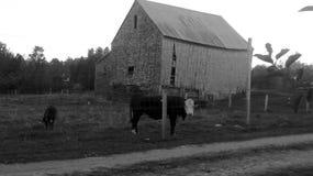 Maine Farm Life stock photo
