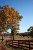Maine-Feld im Fall Stockbilder