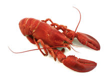 Maine lobster. A great view of our Maine lobster Royalty Free Stock Photos