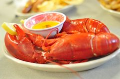 Maine lobster Stock Image