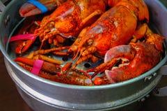 Maine Lobster in de ijzerstoomboot Royalty-vrije Stock Foto