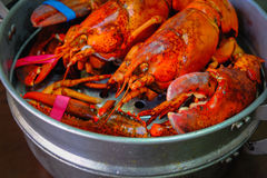 Maine Lobster in the iron steamer. Close up of Maine Lobster in the iron steamer on a dark wooden table Royalty Free Stock Photo