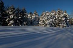 Maine-Schnee Stockfoto