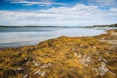 Maine Seacoast Stock Photography