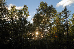 Maine trees during fall with sun flare Stock Photo