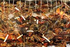 Maine-zeekreeften Stock Fotografie