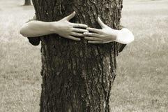 Mains étreignant l'arbre Photographie stock
