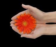 Mains affectueuses photo libre de droits