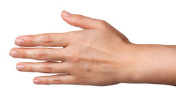 Mains arrières de femelle d'isolement sur le fond blanc Photographie stock libre de droits