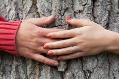 Mains autour de l'arbre Photographie stock