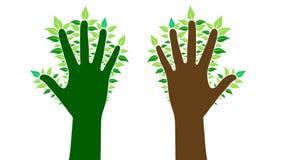Mains avec des feuilles, illustration de vecteur Photographie stock