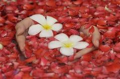 Mains avec des fleurs Photographie stock