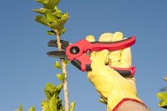 Fond de ciel d'arbre d'élagage de travail de jardin Images stock