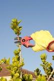 Fond de ciel de buisson d'élagage de travail de jardin Image libre de droits