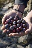 Mains avec des olives Images stock