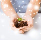 Mains avec la pousse et la terre vertes Photo stock
