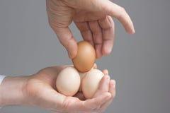 Mains avec quatre oeufs de poules image stock