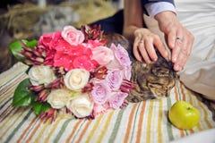 Mains, chat et un bouquet de mariage photos stock