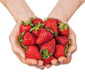 Mains complètement des fraises organiques Photographie stock libre de droits