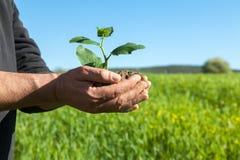 Mains d'agriculteur avec l'usine Photo libre de droits