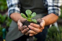 Mains d'agriculteur plantant la pousse dans le sol image libre de droits
